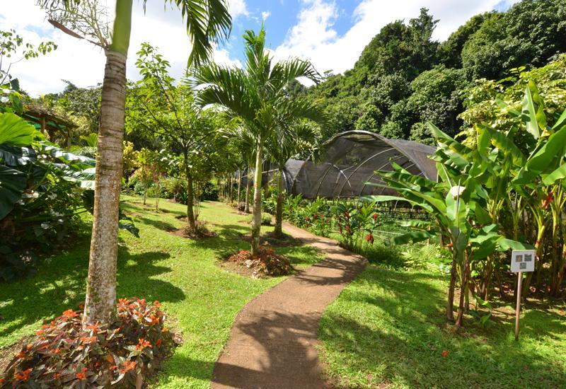 Jardin Alexina